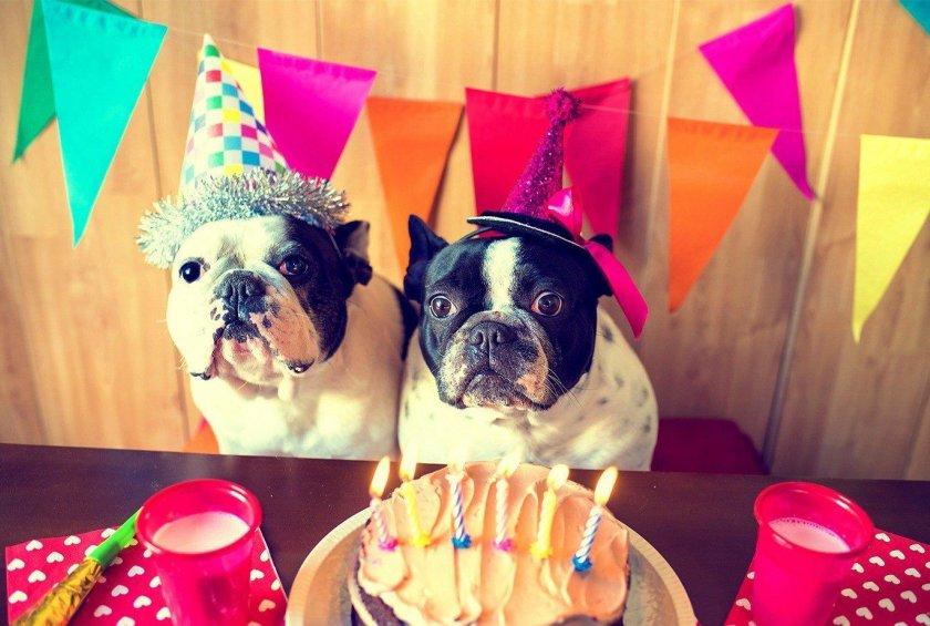 Chiens devant un gâteau d'anniversaire
